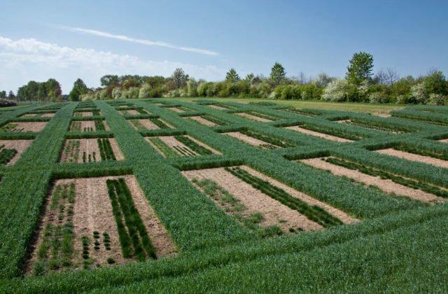 Quadratische Anbauflächen