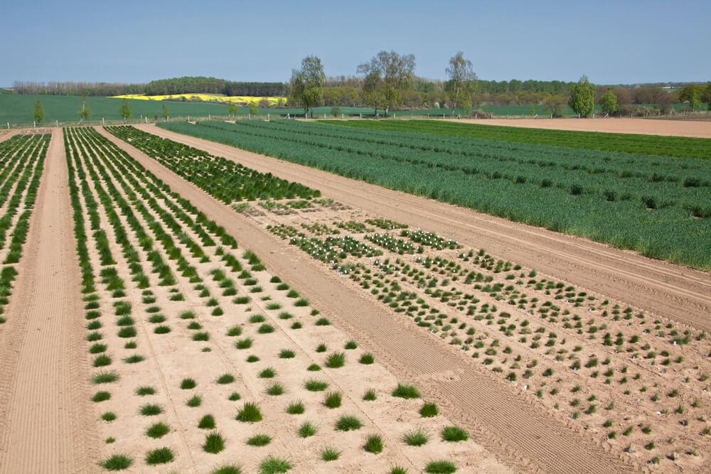Felder mit Angebauten Pflanzen
