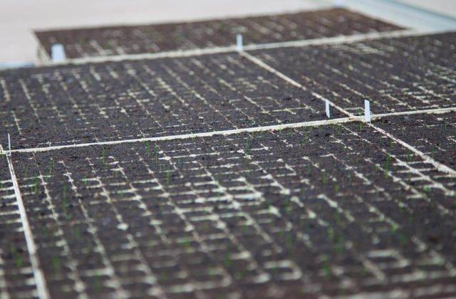 Pflanzen wachsen aus der Erde