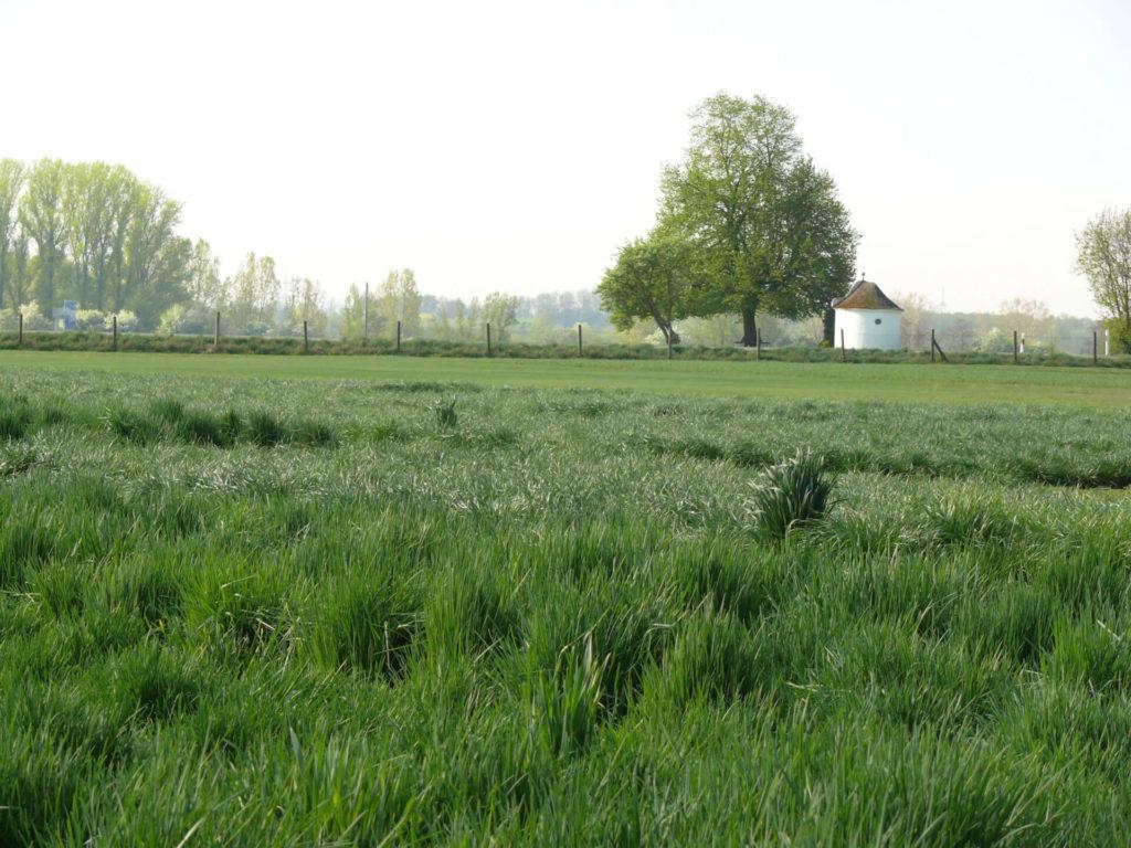 Wiese mit Bäumen im Hintergrund