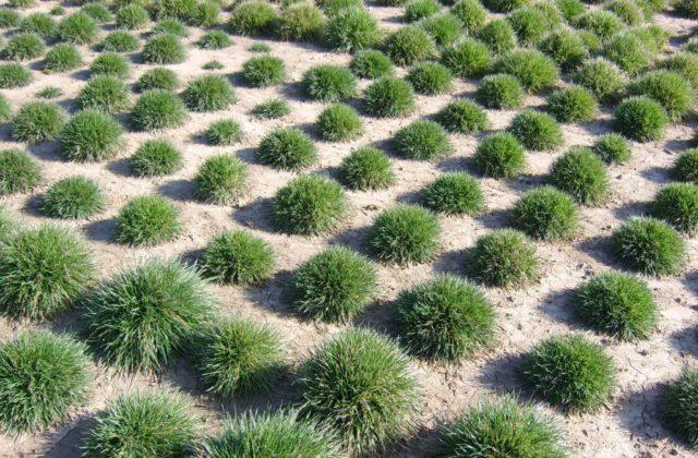 Pflanzenbüschel wachsen aus trockener Erde
