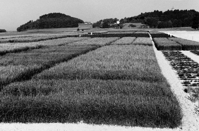 schwarz-weiß Bild von Feldern