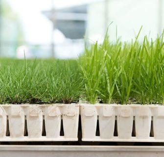 Angebauter Rasen