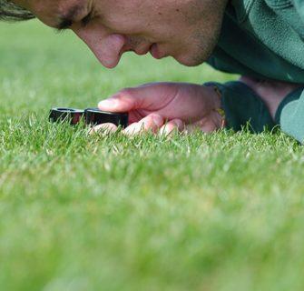 Rasen wird mit Lupe überprüft